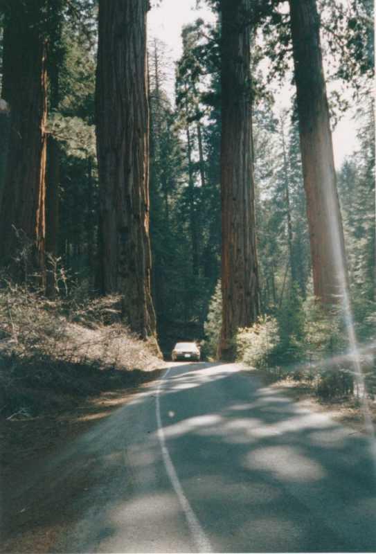1993-05-10-0164-Sequoia.jpg