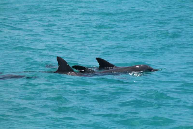 2016-05-22-2255dolphins.jpg